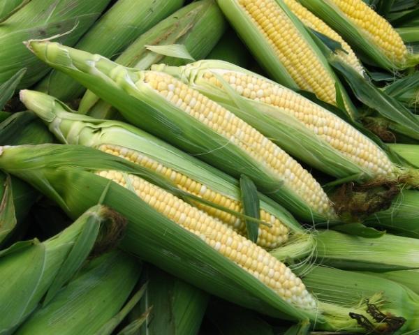 Кукуруза станет второй после пшеницы