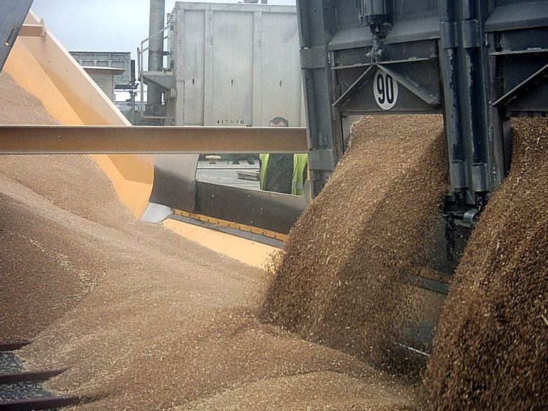 Главная экспортная позиция— пшеница