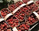 Под Липецком запущен ягодный агрокластер для Danone