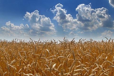 Группа «Черкизово» увеличила земельный банк до 300 тысяч гектаров