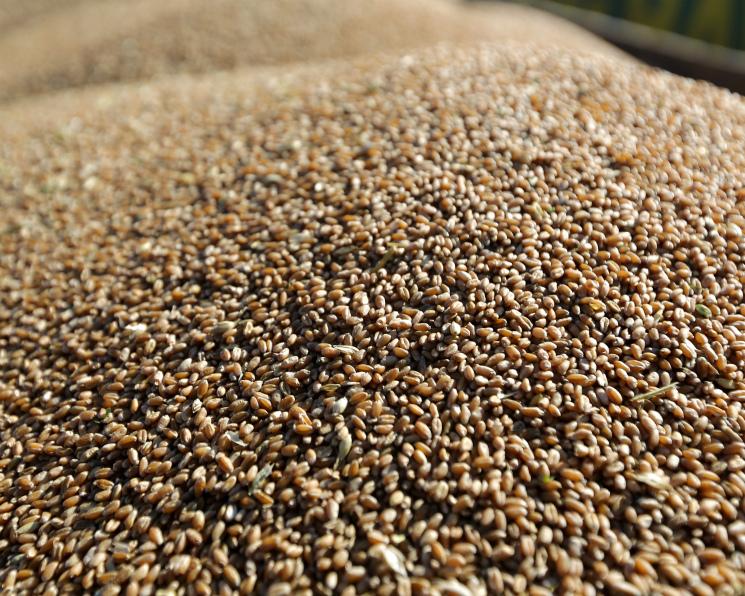 Экспортные цены ячменя ипшеницы сравнялись впервые с2013 года