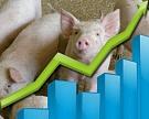 «Агро-Белогорье» реализовало в I полугодии на 15% товарных свиней больше