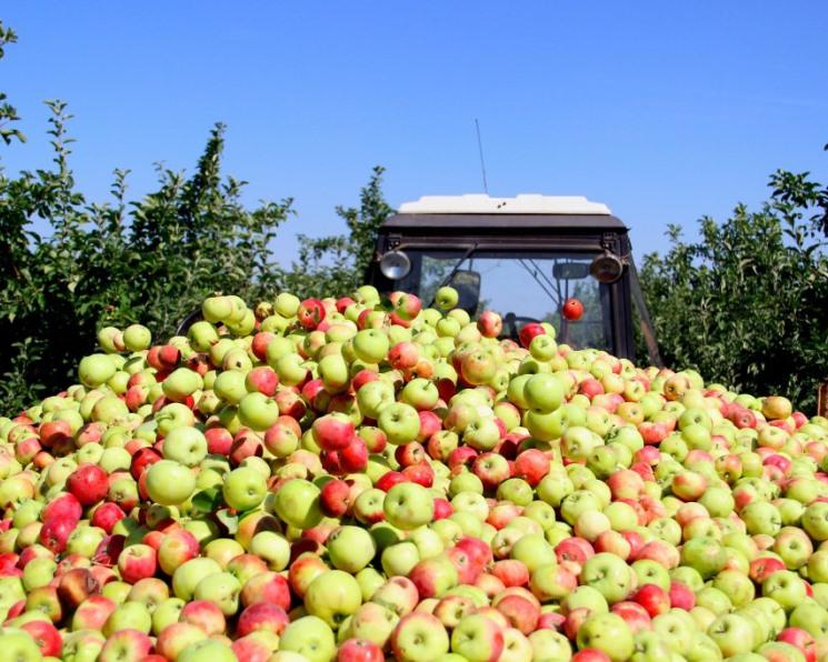 Урожай плодов и ягод может побить рекорд прошлого года