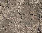 USDA: из-за засухи Россия недоберет 4 млн тпшеницы