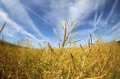 Стратегия-2030: урожай картофеля вырастет на8%, масличных— в1,5 раза