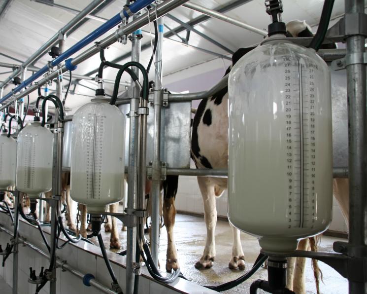 Молочная отрасль около нуля. Производство молока снова вырастет не больше чем на 1%