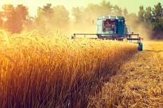 Ячмень дороже пшеницы. Почему вэтом сезоне сложилась такая аномалия