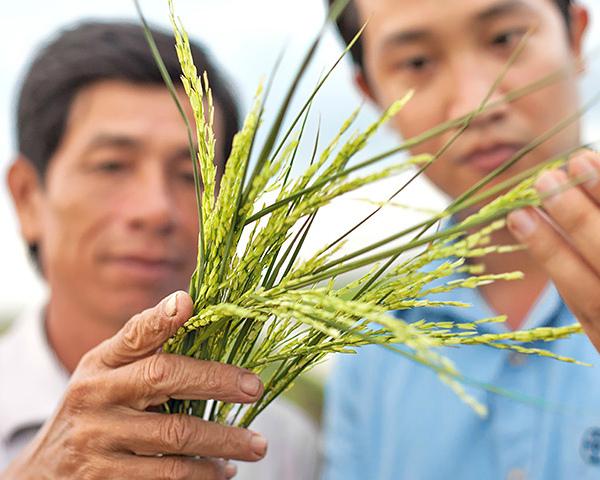 Фунгициды регулируют время цветения растений