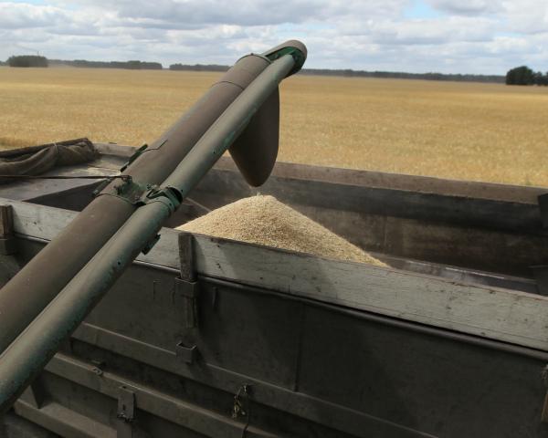 COFCO, крупнейшая продовольственная корпорация Китая, рассчитывает закупать в России не менее 1-2 млн т пшеницы в год