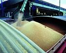 Экспортные цены на пшеницу за неделю выросли