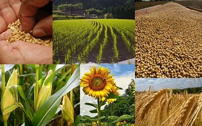 Как США оценивают урожай 2016 года