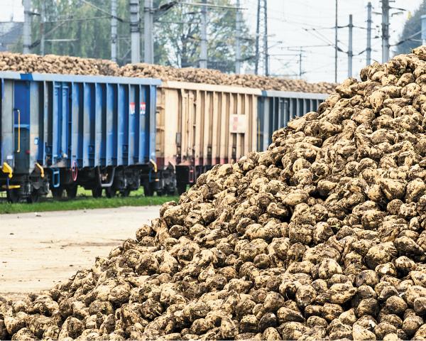 Свеклосахарная отрасль теряет до20% урожая