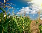 Эффект отложенного спроса: рынок техники для заготовки кормов оживился
