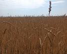 Урожай зерна в 106 млн тонн подтверждается