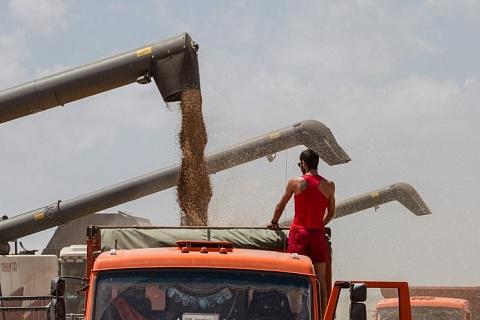 В августе агропроизводство увеличилось на 2,8%