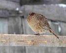 Челябинская область ввела мораторий на выдачу госгарантий из-за проблем птицеводов