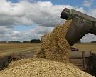Выйдем ли на рекорд? Россия может собрать до 111 млн т зерна