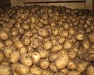 Россия в этом году может недобрать 3 млн тонн картофеля