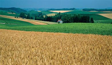 Мало сельхозбизнеса