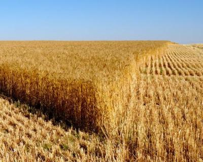 ВКабардино-Балкарии хотят увеличить площадь кормового клина на68%