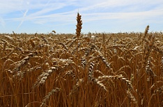 Правительство одобрило законопроект оборганическом сельском хозяйстве