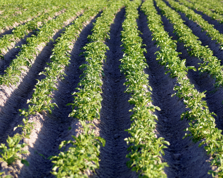 Миллиардер иэкс-сенатор Глеб Фетисов будет выращивать овощи