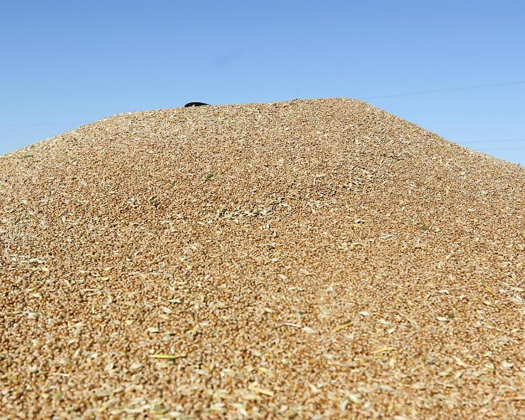 Экспорт зерна превысил 29 млн тонн
