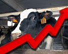 В Ростовской области поголовье КРС выросло на 2%