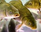 Утверждены правила определения водных участков для аквакультуры