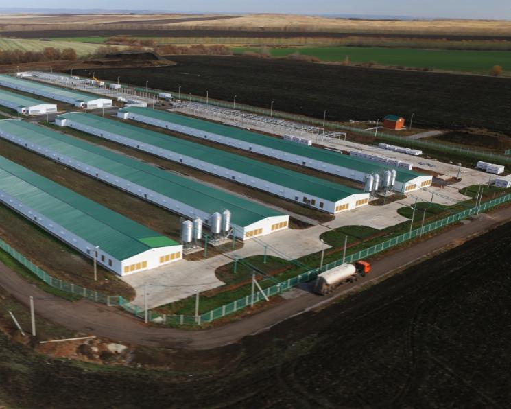 «Башкирский птицеводческий комплекс имени М. Гафури» пытается реструктуризировать кредиты в объеме 6 млрд рублей
