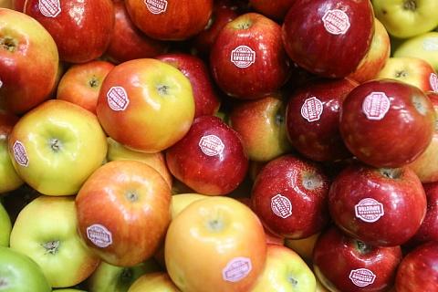 «АФГ Националь» начал брендировать яблоки
