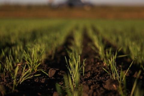 В России завершается озимый сев