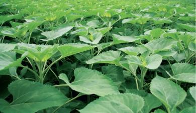 ДонГАУ занялся бинарным земледелием