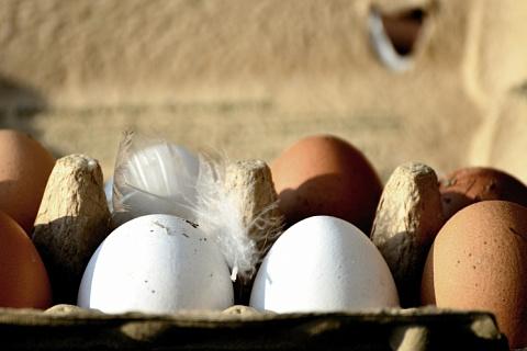 На птицефабрике из топ-10 обнаружен грипп птиц