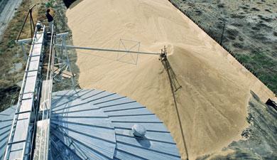 ВIGC надеются нарост зерновых ресурсов