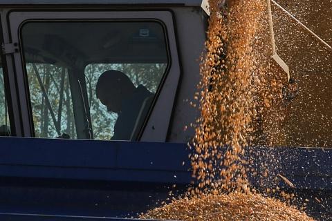 РЗС: ограничение экспорта зерна ударит по аграриям