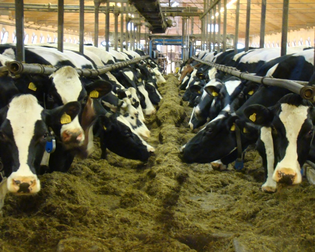Счетная палата выявила 2-кратный рост стоимости молока напути домагазинов