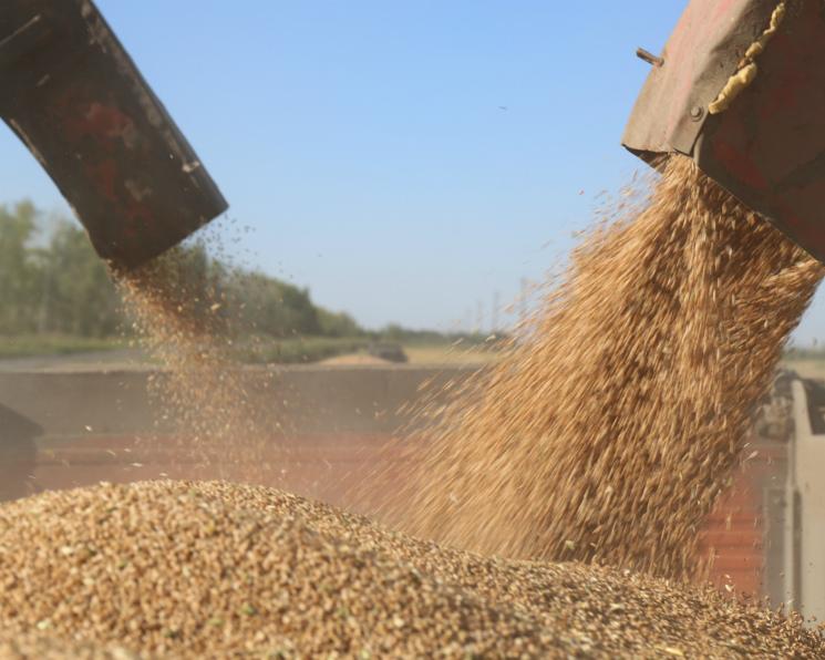 Вэтом сезоне качество пшеницы улучшилось