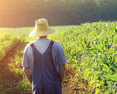 ЛИШНИЕ фермеры