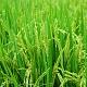 «Агрокомплекс» закрыл сделку сParus Agro Group