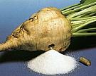 «Ак Барс» инвестирует в модернизацию сахарного завода