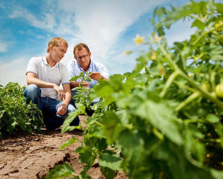 BASF купит уBayer овощной семенной бизнес