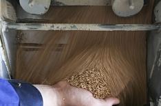 Цены на пшеницу в Сибири резко выросли