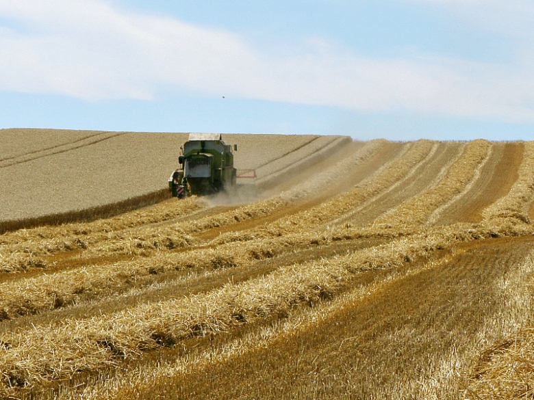Сбор зерна— третий в современной истории