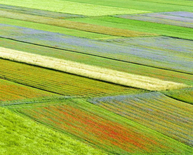 Нишевые агрокультуры теряют популярность. Снижение экспортного спроса влечет сокращение производства