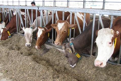 Производство товарного молока вырастет на 2,5%
