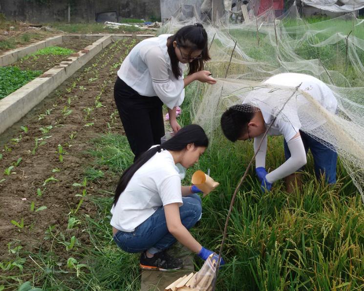 Рис сможет расти насоленых почвах