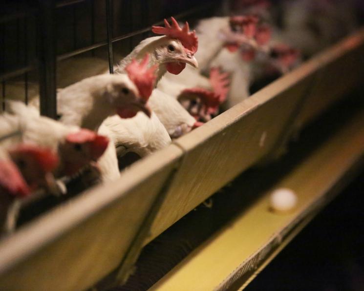 Минсельхоз разработал программу развития кормовой индустрии