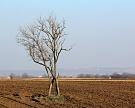 Семья топ-менеджера «Лукойла» покупает 244 тысячи гектаров сельхозземель