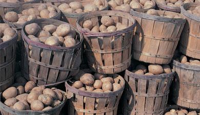 Дом для картофеля